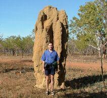 Termitesmall