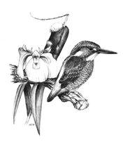 07-kingfisher