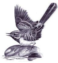 Bt bird 1