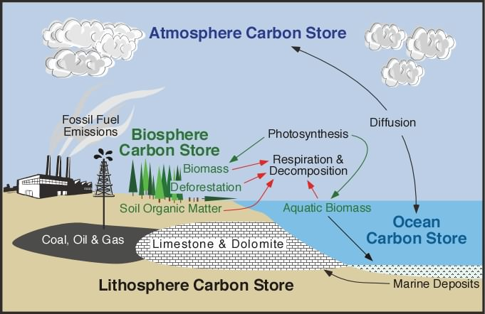 Demonstrate an understanding of and interpret data on the carbon carboncycle ccuart Images