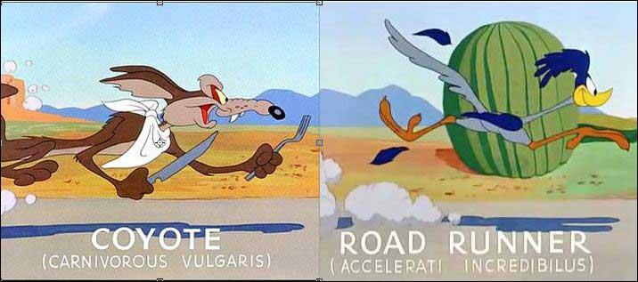 Latin Names Looney Tunes Wiki Fandom Powered By Wikia