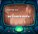 Detained Duck