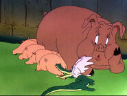 Baby Bottleneck 1946 21 pig gator