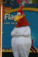 Foghorn Leghorns in Six Flags COVER