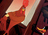 Rooster tries to beat up Daffy