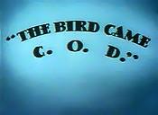 Bird came-1-