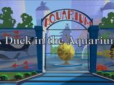 A Duck in the Aquarium