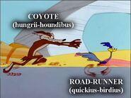Coyote hungrii houndibus