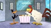 Working Duck (28)