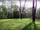 Mekron Woods