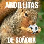 ARDILLITAS DE SOÑORA