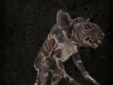 Rat's meat