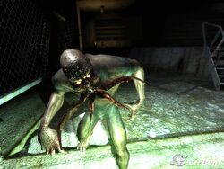 Stalker-shadow-of-chernobyl-20070129060042616
