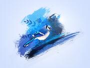 Blue jay by deandemaro-d4va4ln
