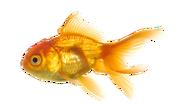 Fish PNG1157