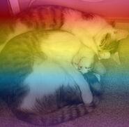 RAINBOW_KITTIES.jpg