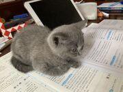 Krystal's cat Pinecone
