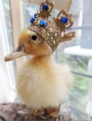 Duckcrown