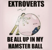 Cool-extroverts-bubble-hamster-ball-1