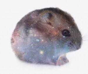 Hamstergalaxy