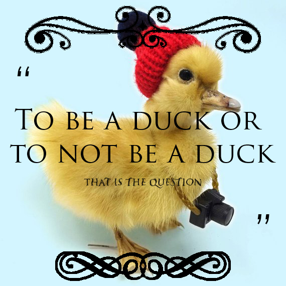 Inspirational duck quote