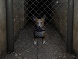 The Dog (Dani)