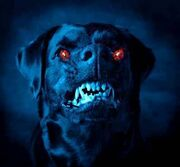 Blackdog2