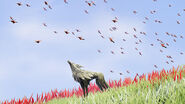 Hummingbirds - Lost Ember