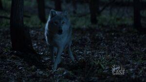 Dyson wolf (103)
