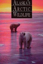 Alaska Arctic Wildlife