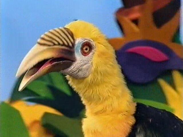 File:Hortense the Hornbill.jpg