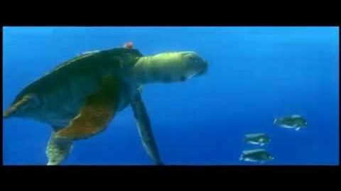 Finding Nemo 2:35.1 aspect ratio