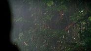 Walt jungle
