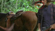 5x15-blooper-hand-of-horse-trainer