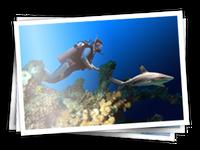 Ajira-nadando
