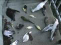 Birdsportal