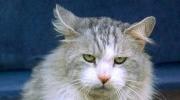 Nadia Cat m