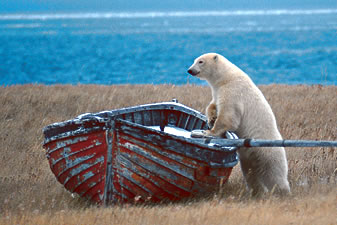 BearBoat
