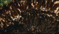 Cratère Cygne