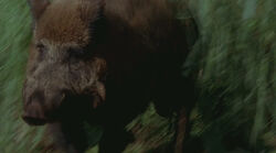 1x17-Boar