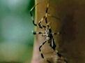SpiderExposePortal