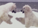 Portal-Polar bears