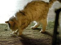 3x11-nadia-cat-rug