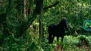 Kates Pferd - Trainer