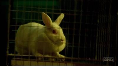 BunnyFaceShot