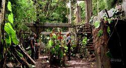 OrchidGreenhouse
