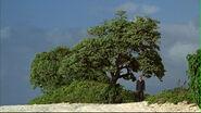 1x04 arbreshephard