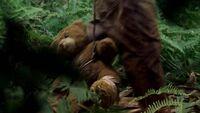 2х05 медвежонок