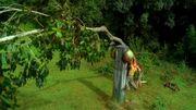 TreeFence 3x12