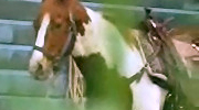 Horse-m